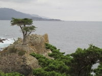 Lonely cypress at 17-Mile-Drive